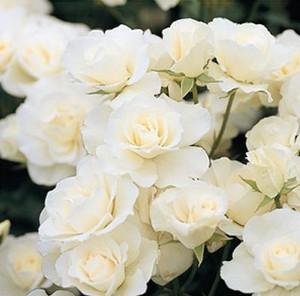 Roseshop_1121302031000001